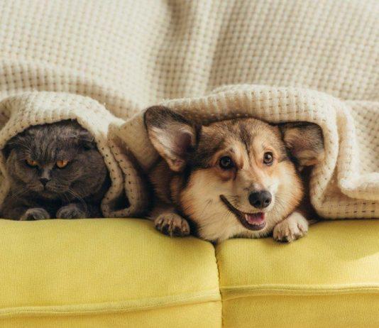 Keep pets safe during a storm