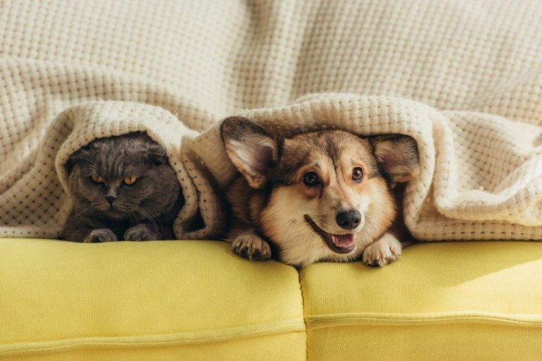 Six Tips To Keep Pets Safe During Storm Season
