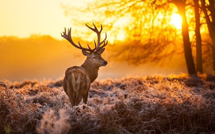 As Hunting Seasons Approach, Navicent Health Physicians Encourage Safety