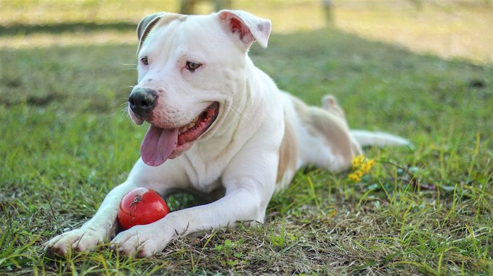 Five Ways to Support Shelter Animals if You're Not Ready to Adopt