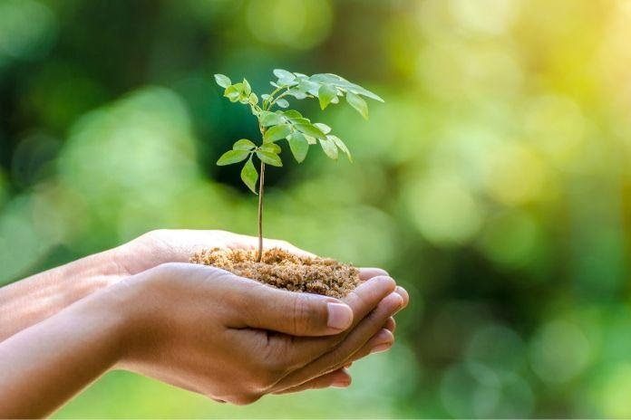 Simple Ways You Can Protect the Earth and Make a Difference