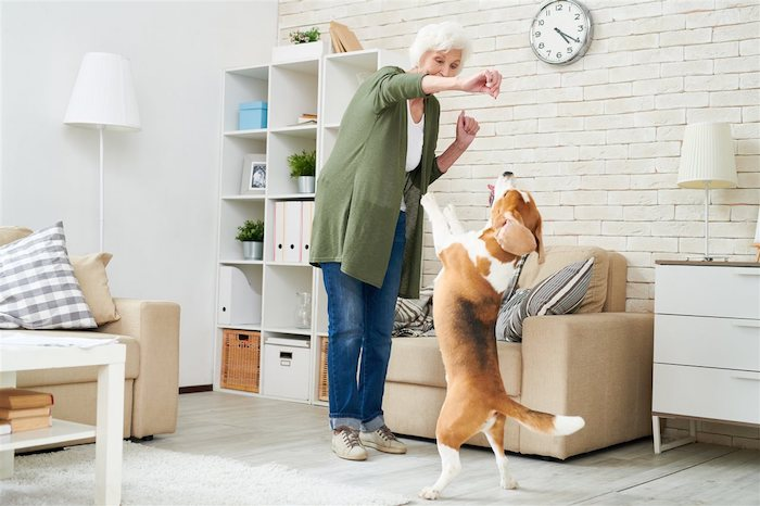 3 Ways to Keep Senior Pets Happy and Healthy