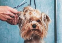The Benefits of Professional Dog Grooming