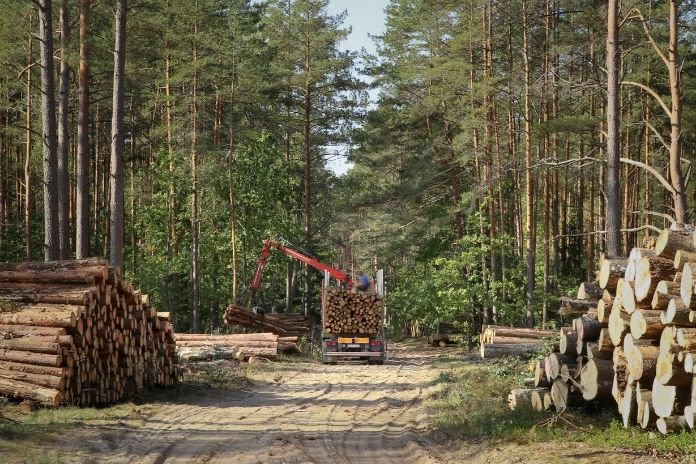 The Numerous Benefits of Logging