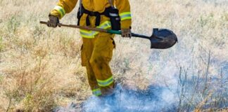What Wildland Firefighters Do After a Fire