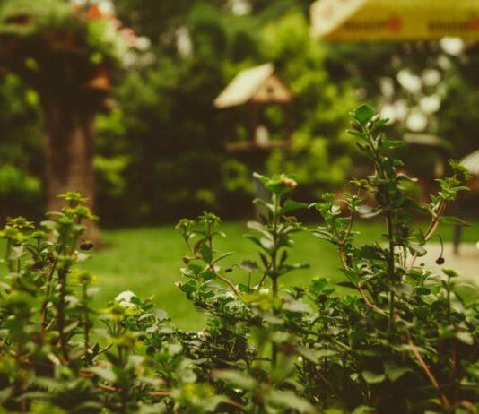 backyard gardening tips