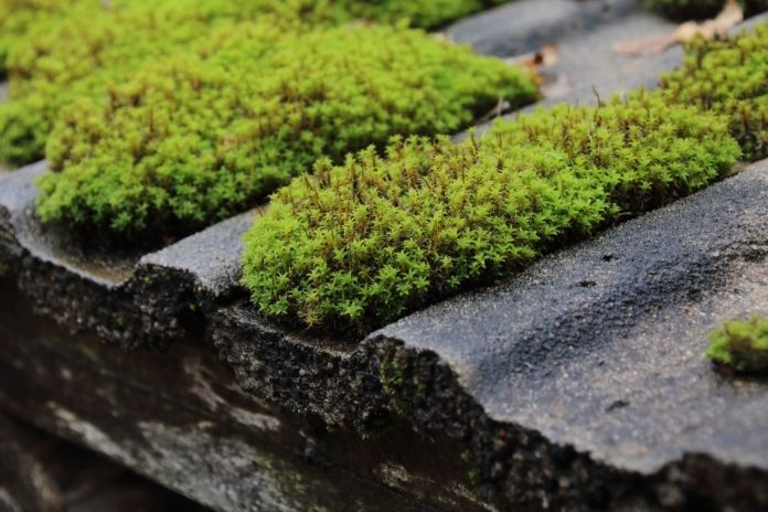 Things That Can Damage Your Roof