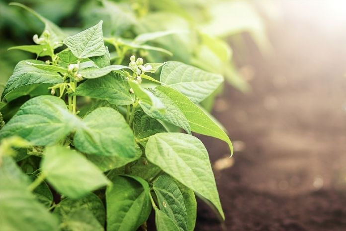Why Nitrogen Matters in Crop Production Nutrients