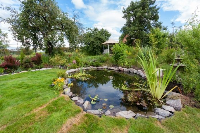 How To Prepare Your Pond for Summer