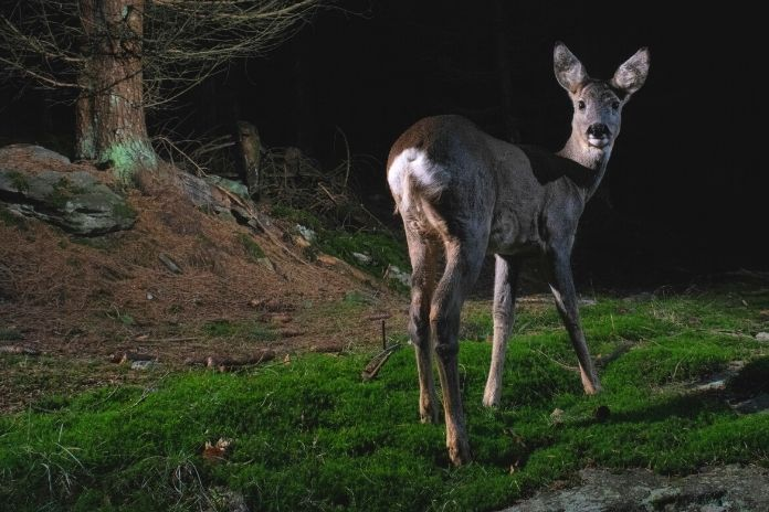 Safety Tips for Hunting Predators at Night