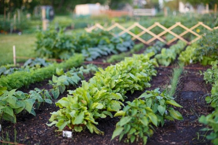 Tips To Keep Your Garden Clean and Healthy