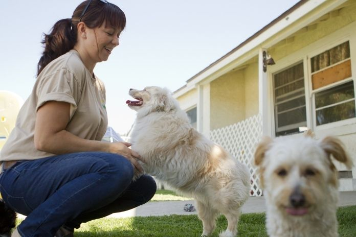 What To Look For in a Quality Dog Boarding Facility