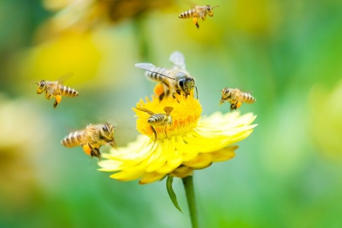 What Will Happen to the World if Bees Go Extinct?