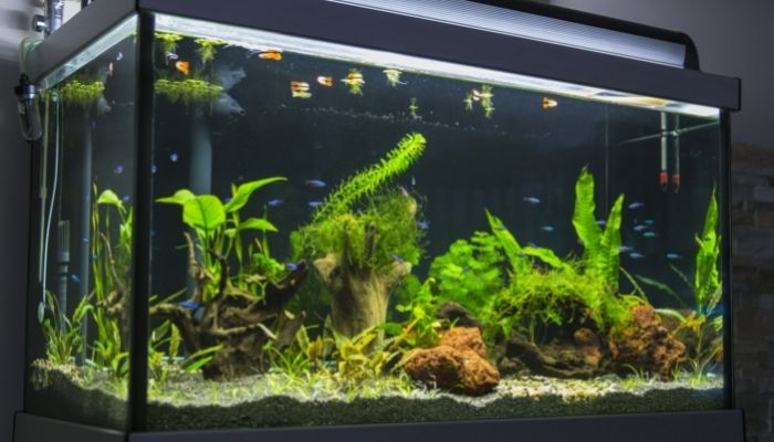 What Homeowners Need To Know Before Buying an Aquarium